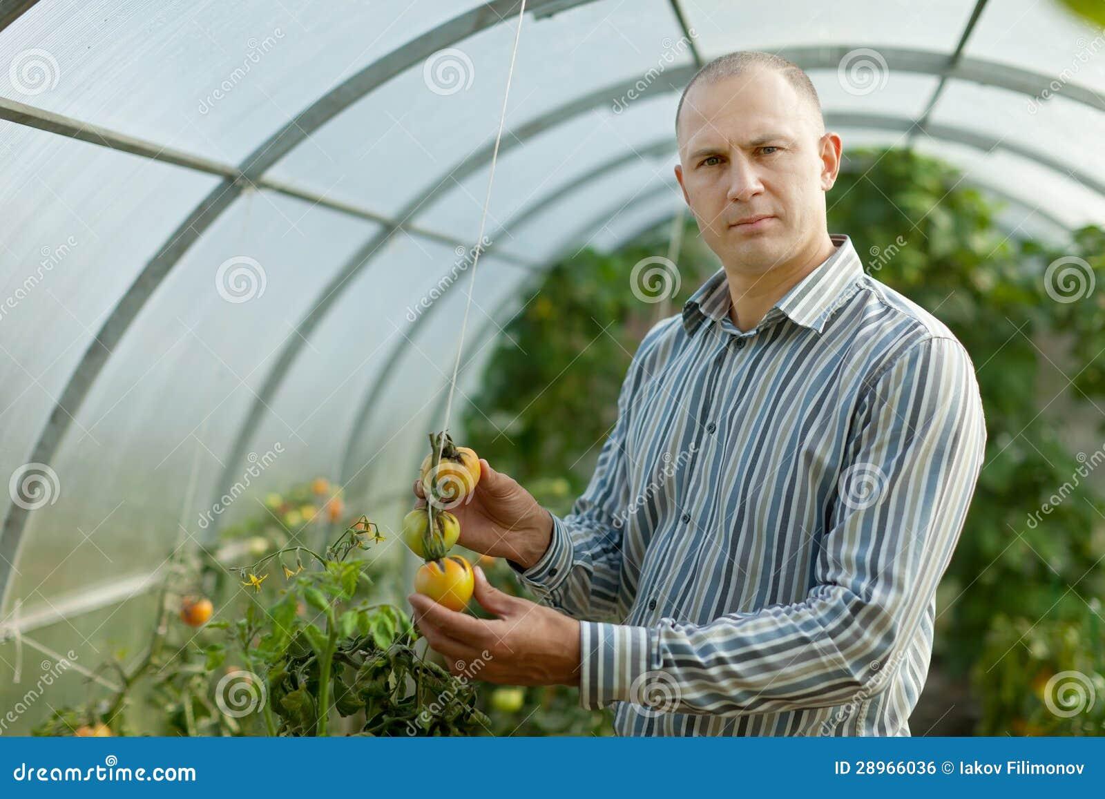 Rolnik patrzeje pomidor rośliny