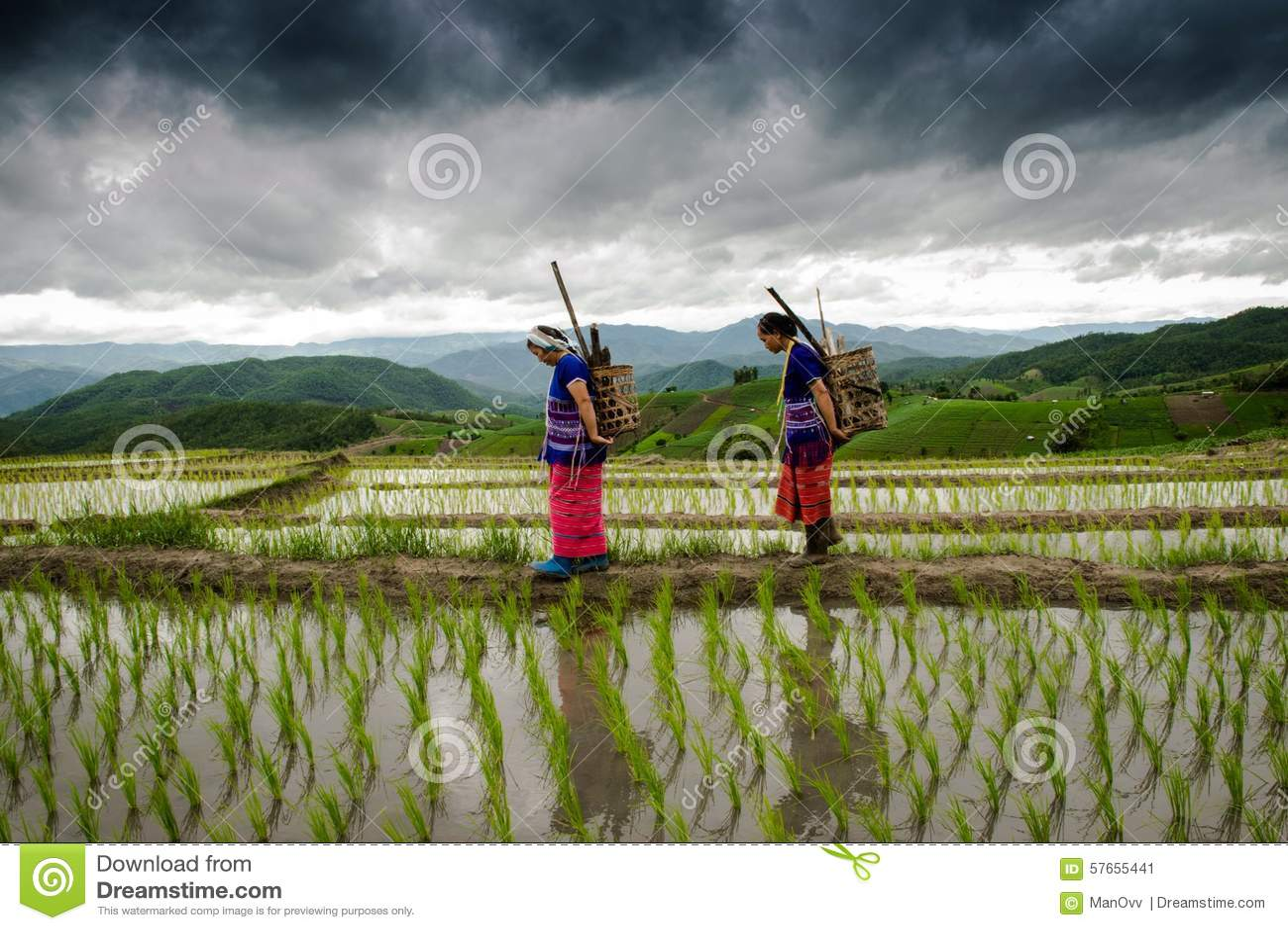 Rolnik przy ryżowymi tarasów papongpians maechaen chiangmai Thailand
