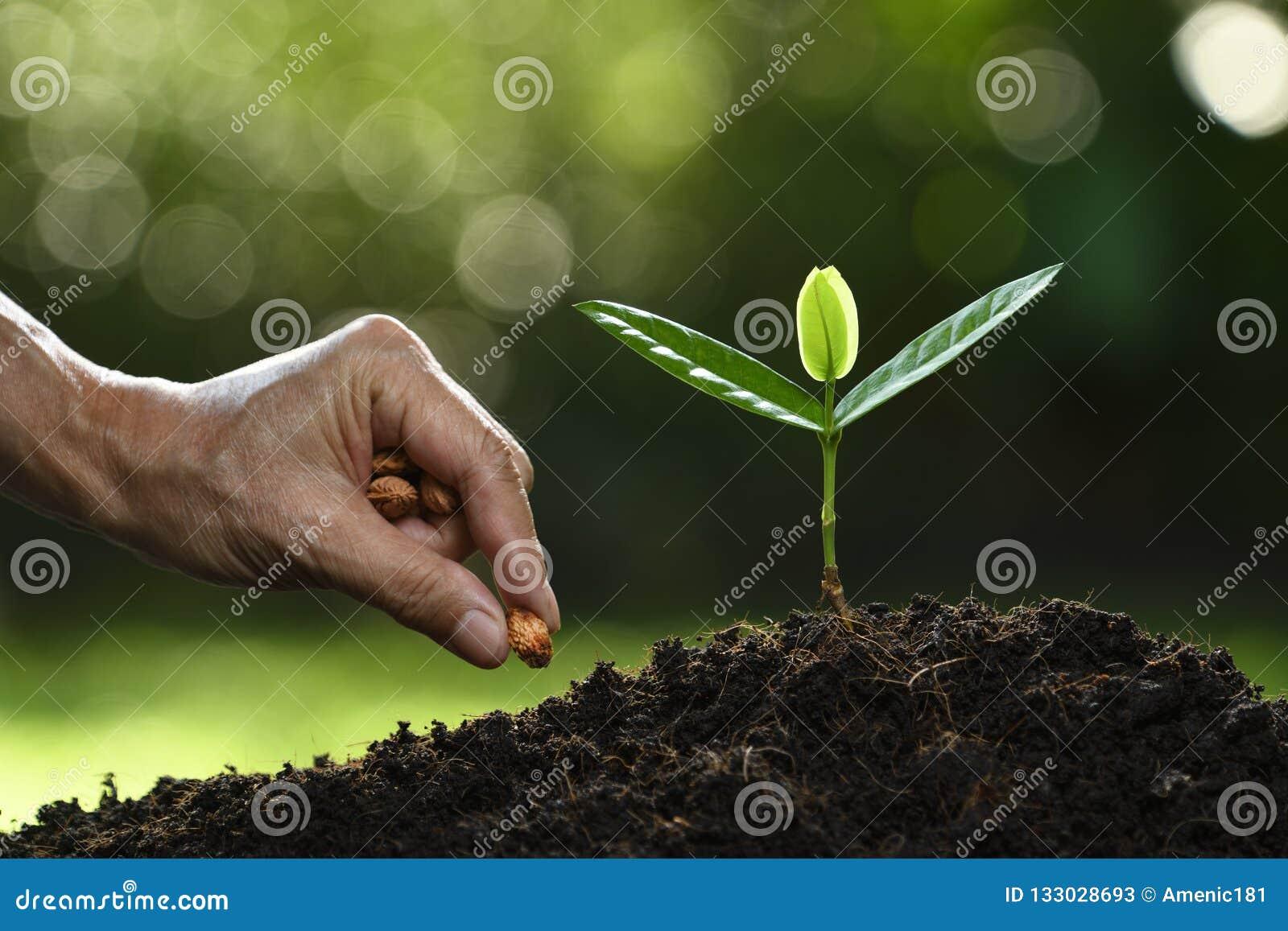 Rolnik ręki flancowania ziarna w ziemi na naturze