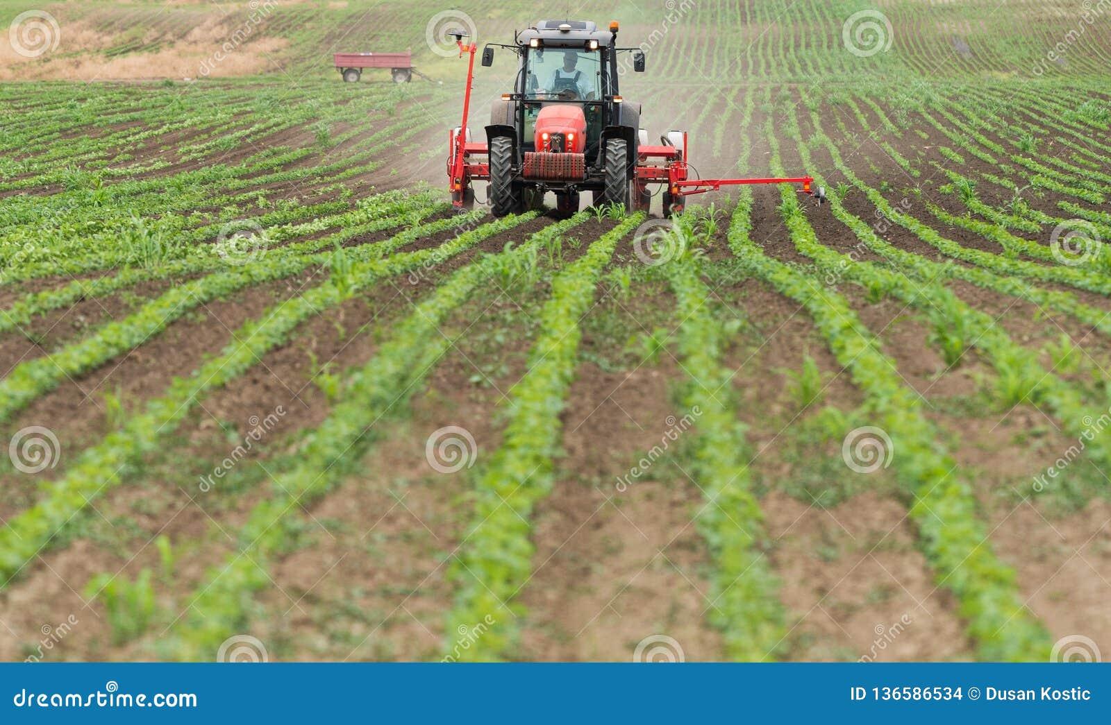 Rolnik z ciągnikowymi obsiewanie soj uprawami przy rolniczym polem