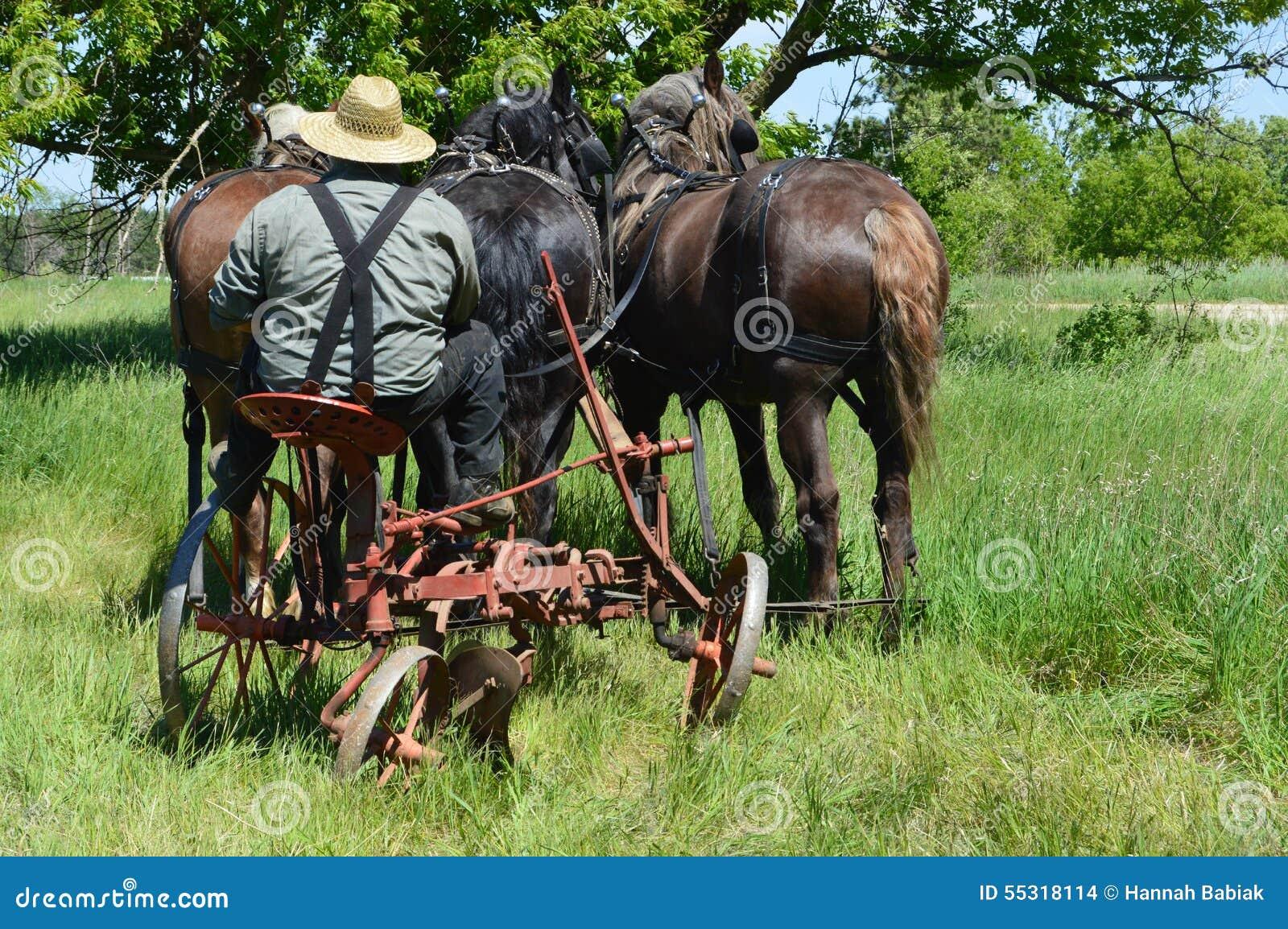Rolnik z koniami