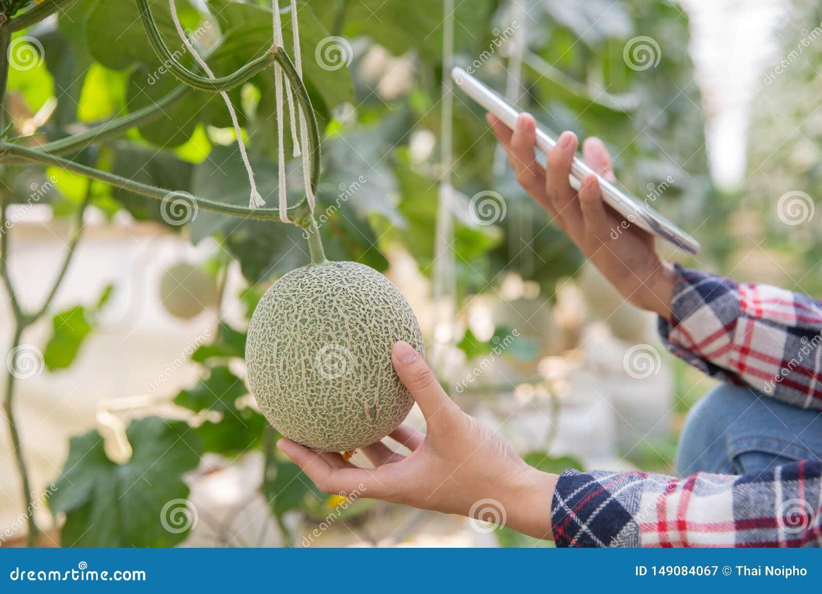 Rolnik z pastylk? dla pracowa? organicznie hydroponic jarzynowego ogr?d przy szklarni?