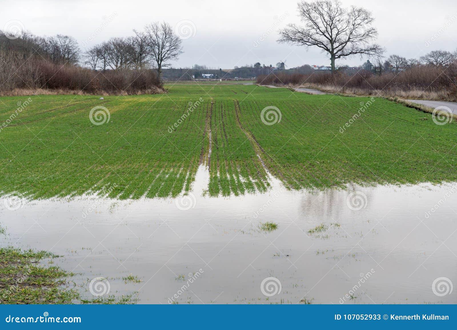 Rolnik zalewający pole