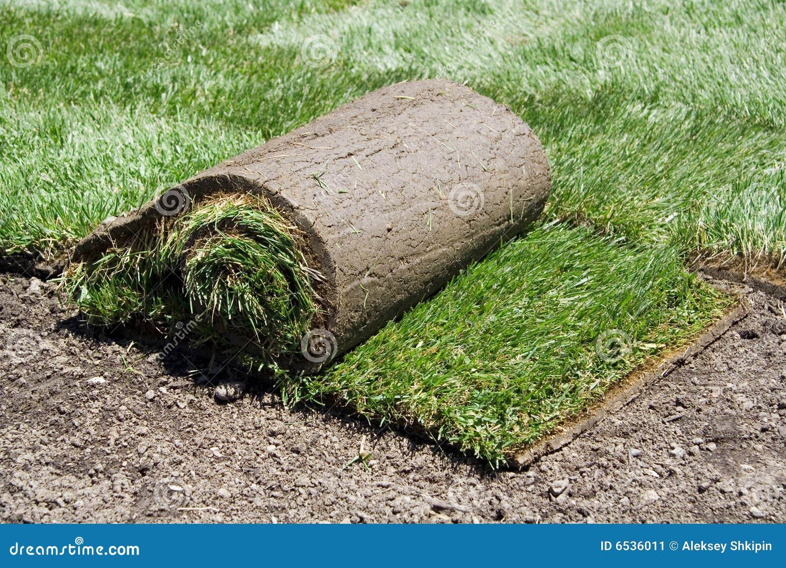 Rolo do sod e da grama verde