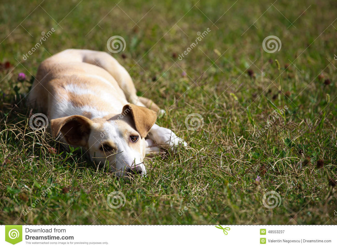 Dog relaxing and sprawling on the grass. Relaxing Dogs