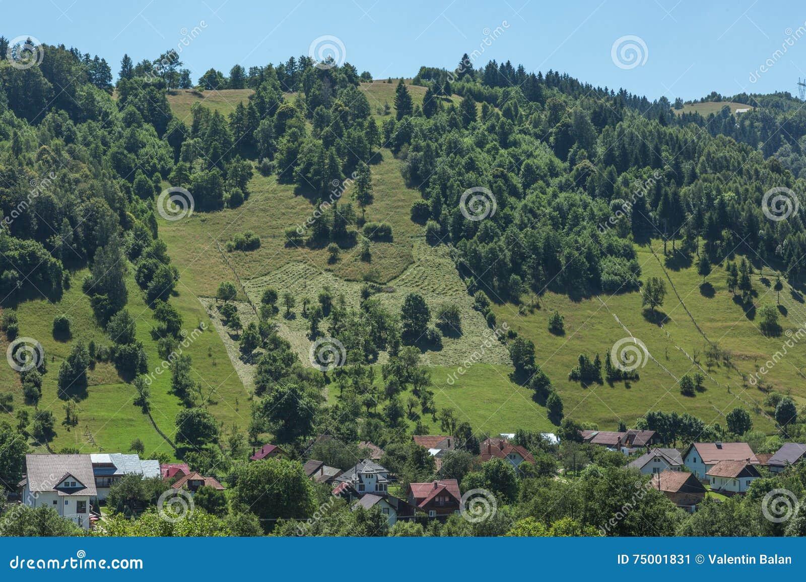 Romanian summer landscape
