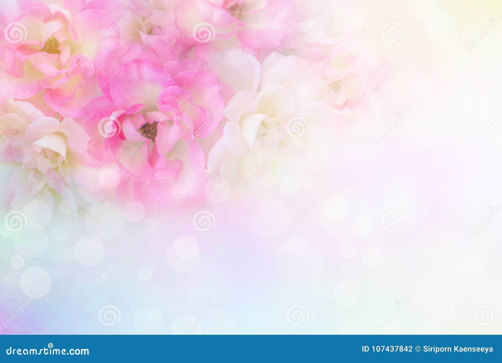 Romanska rosa och vita rosor blommar tappningbakgrund för valentin