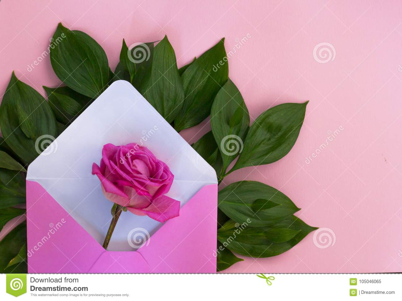Romantic Envelope Rose Flower Love Gift Pink Background Stock Image