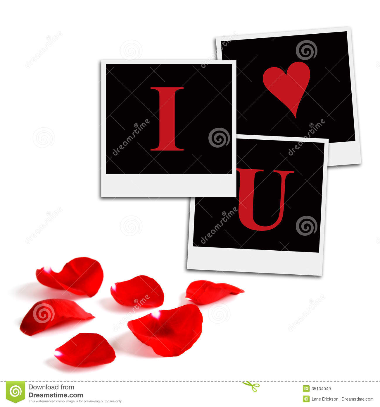 romantic film frames and rose petals royalty free stock images