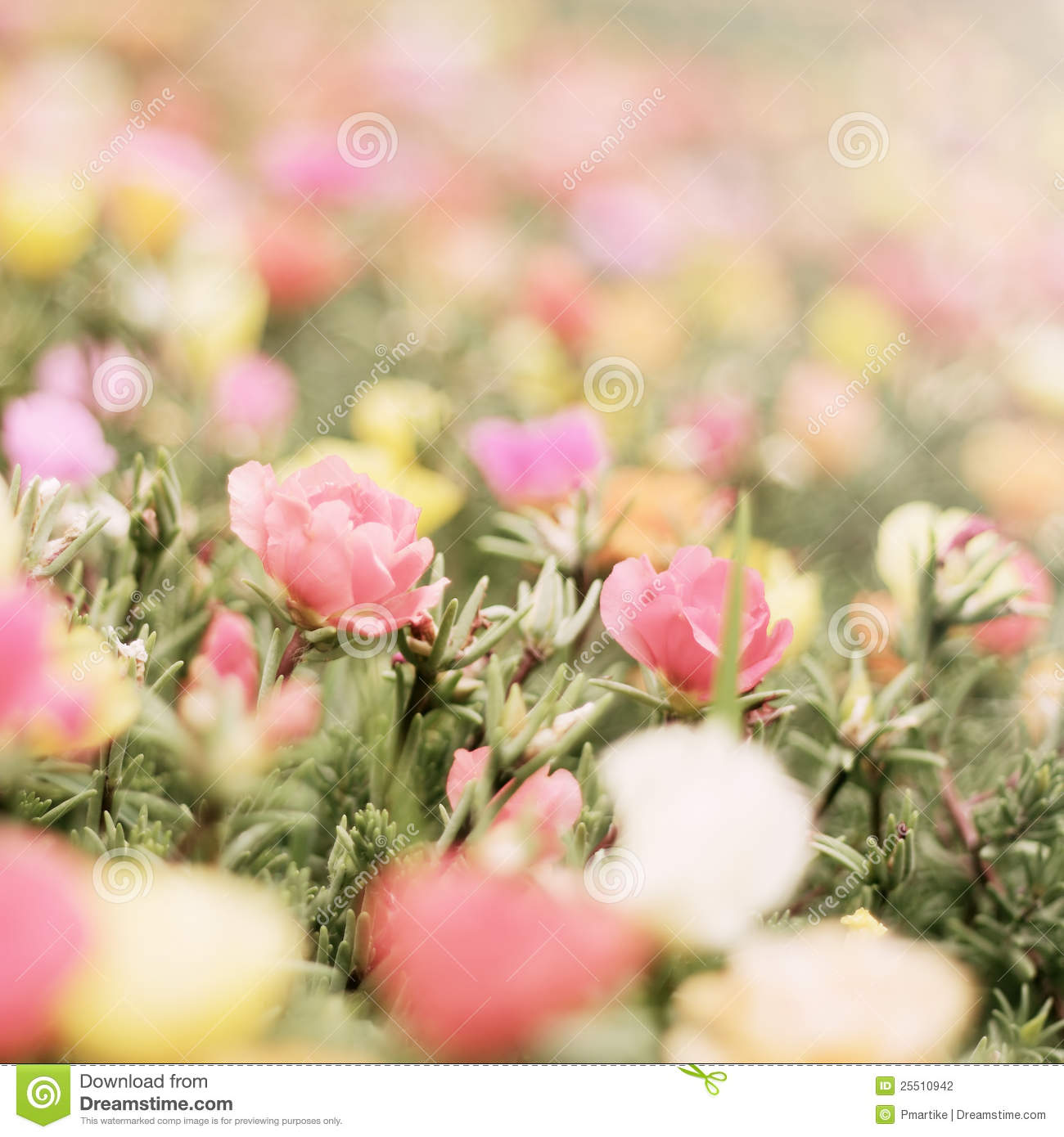 romantic flower stock photography  image, Beautiful flower