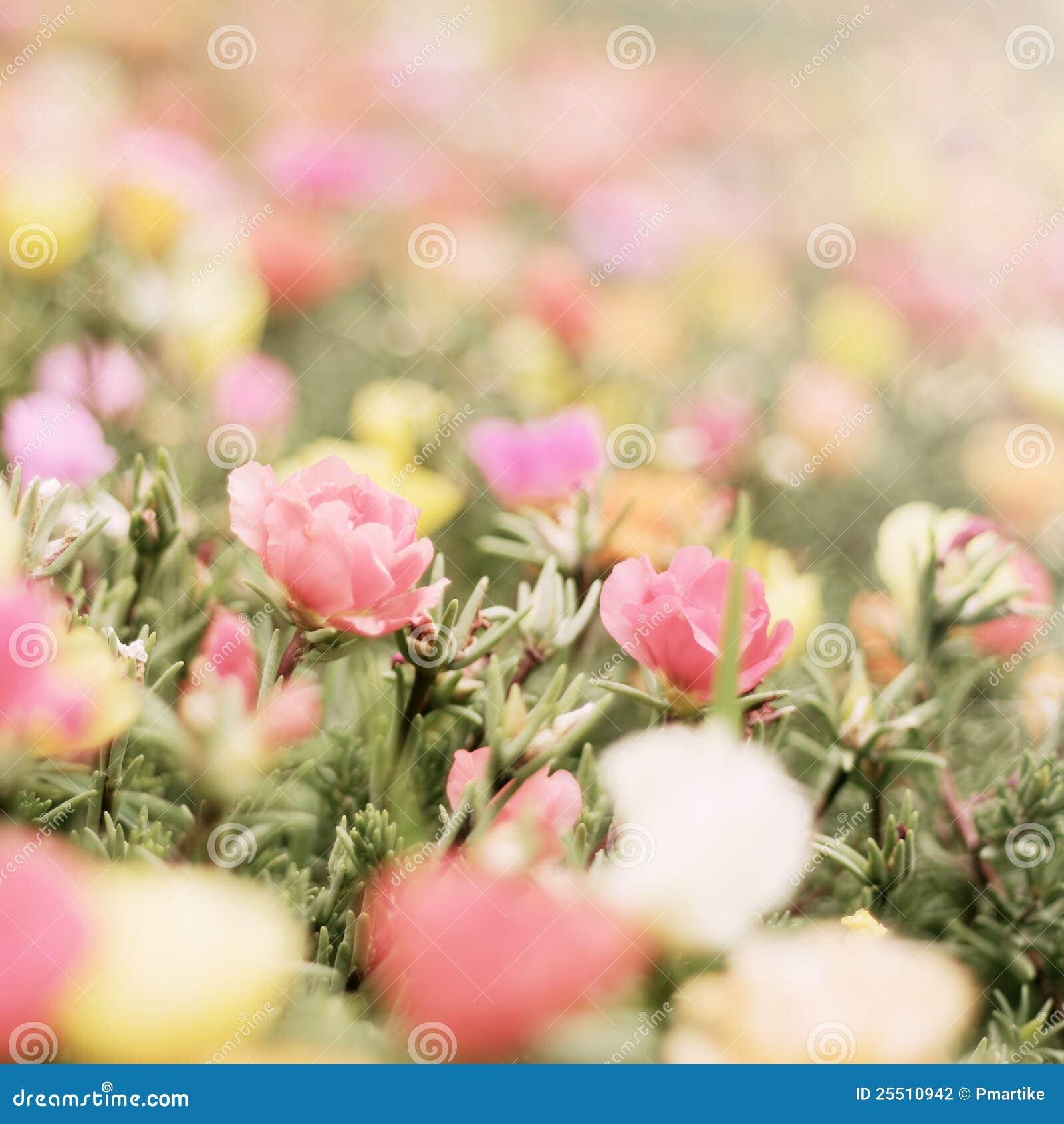 Beautiful pink flowers in the garden stock photography image - Romantic Flower Stock Photography Image 25510942