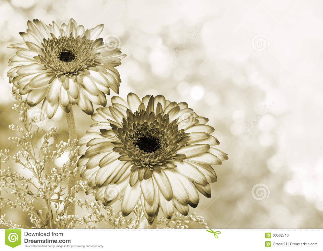 Romantic Flower Background Stock Photo Image Of Beautiful 60562716