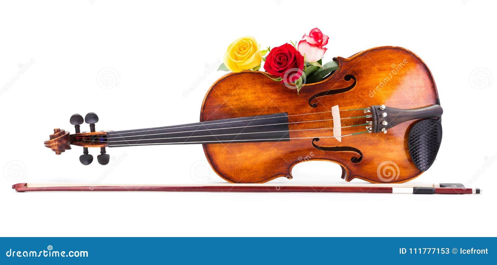Roses on violin