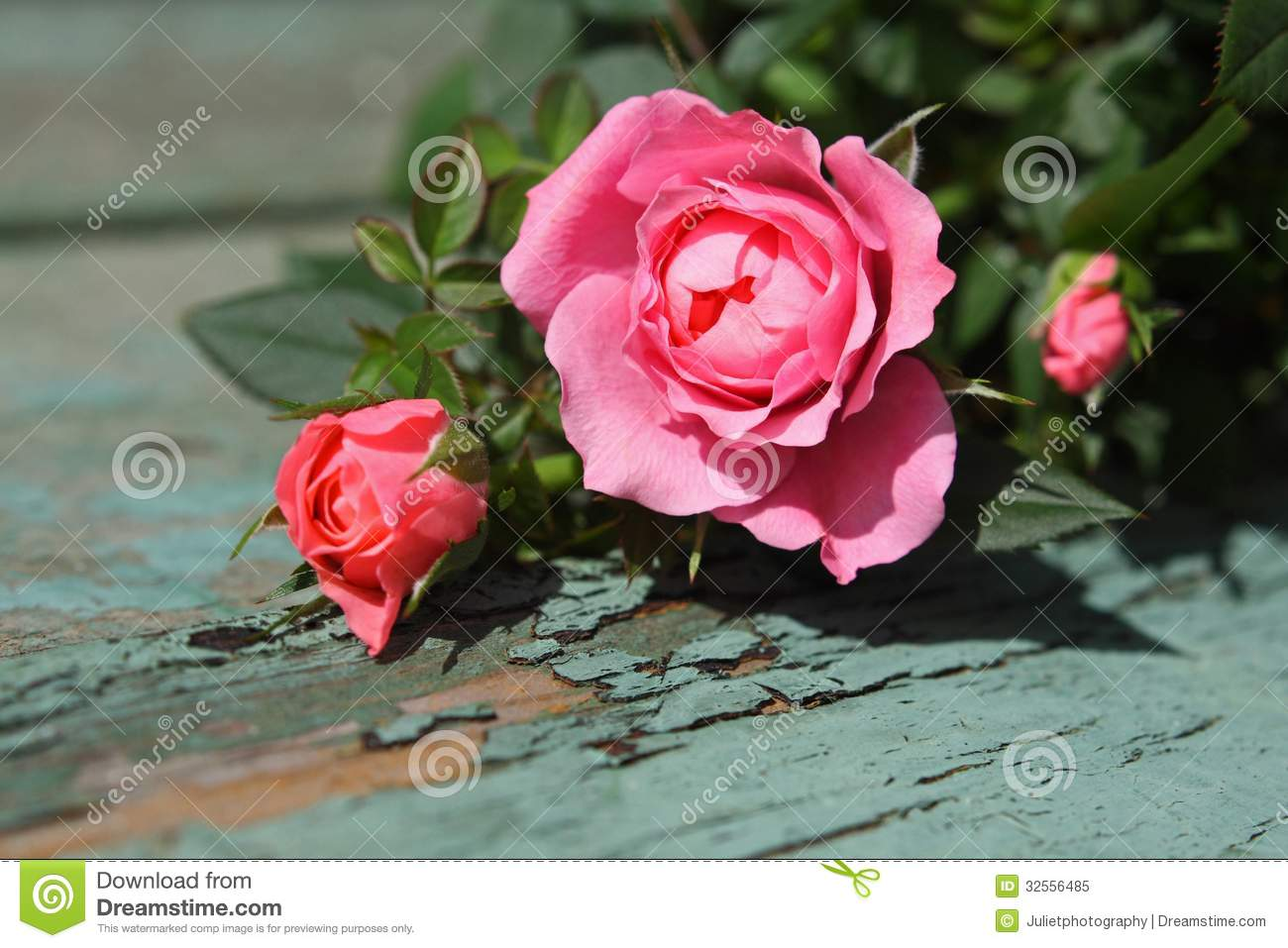 Romantic Pink Roses Background Stock Image - Image of rose ...