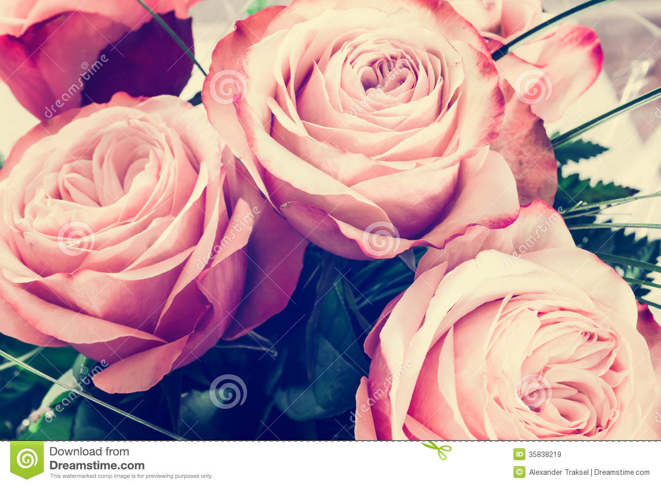 Romantic Pink Roses Vintage Background Royalty Free Stock ...