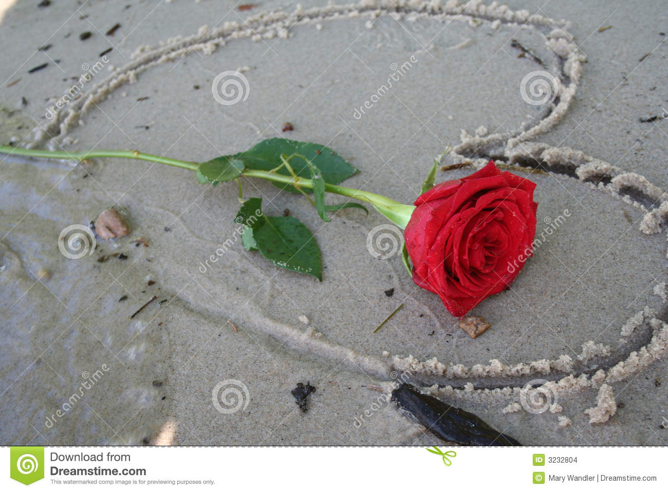romantic red rose stock images  image, Beautiful flower