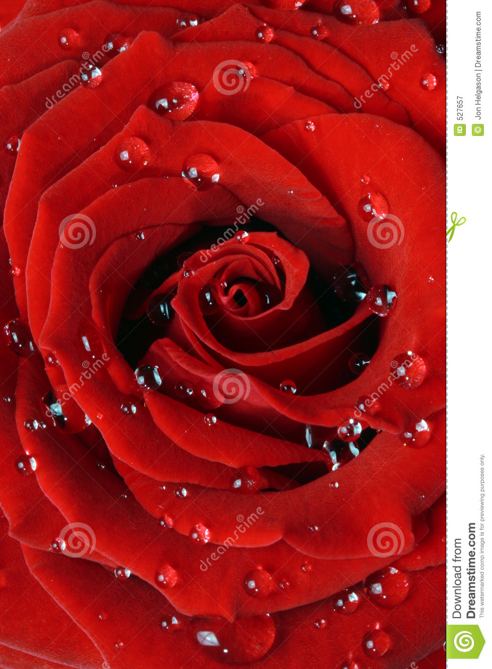 romantic red rose royalty free stock photography  image, Beautiful flower