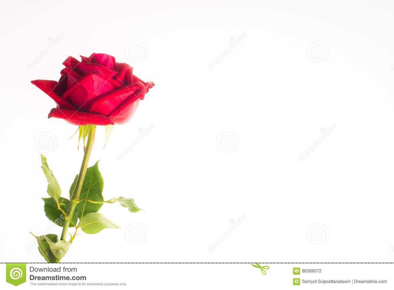 Romantic Red Rose Border White Background Stock Photo Image Of