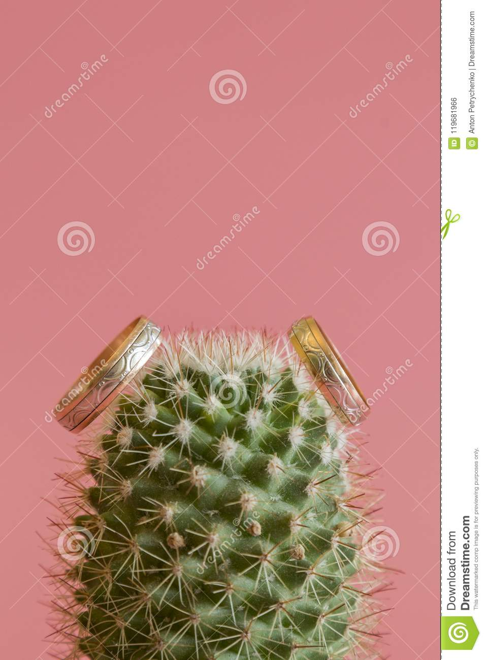 Romantic Wedding Ring On Cactus And Pink Background Selective Focus ...