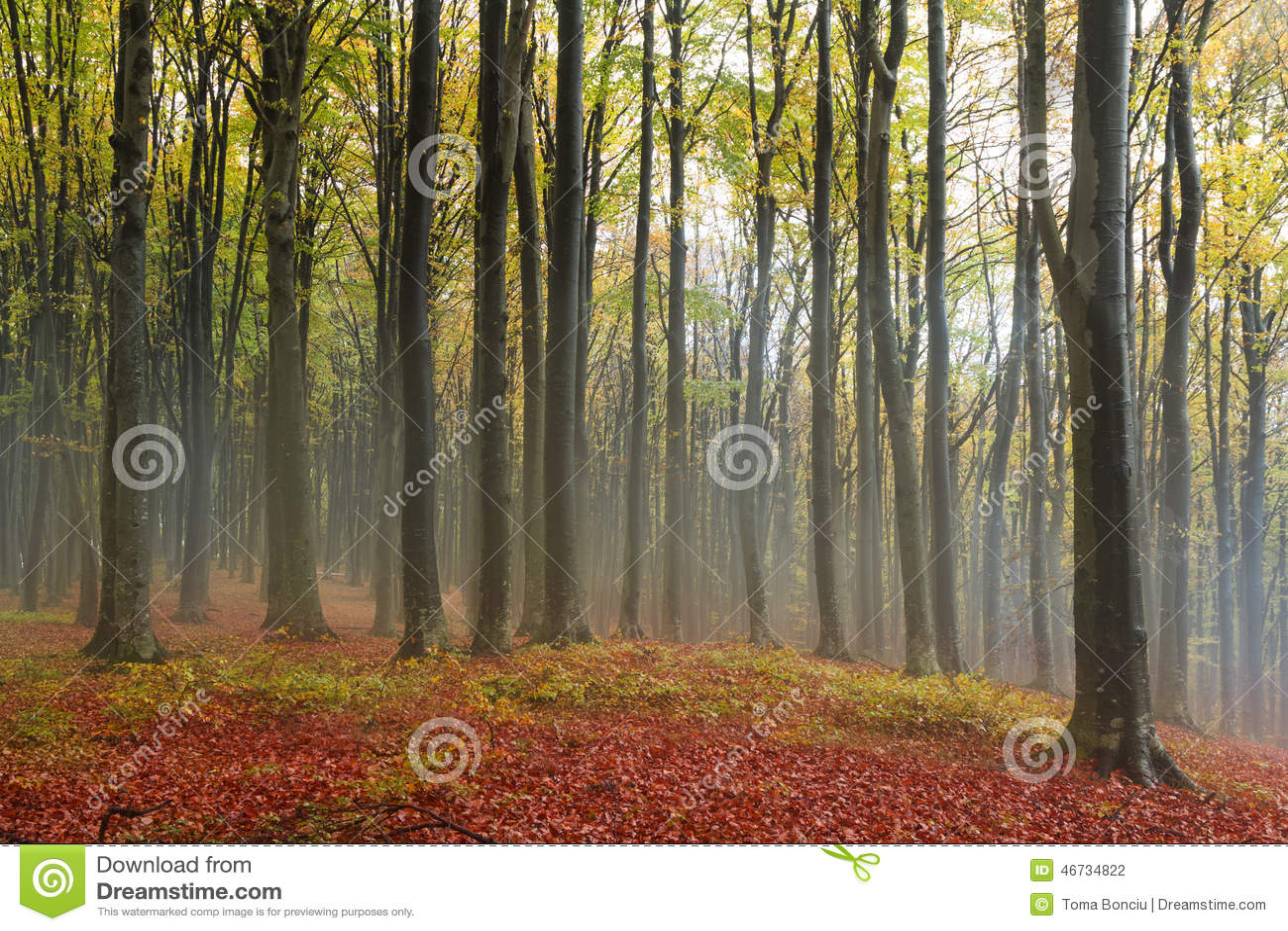 Romantische atmosfeer tijdens mist int hij bos in daling stock foto afbeelding 46734822 - Romantische kameratmosfeer ...