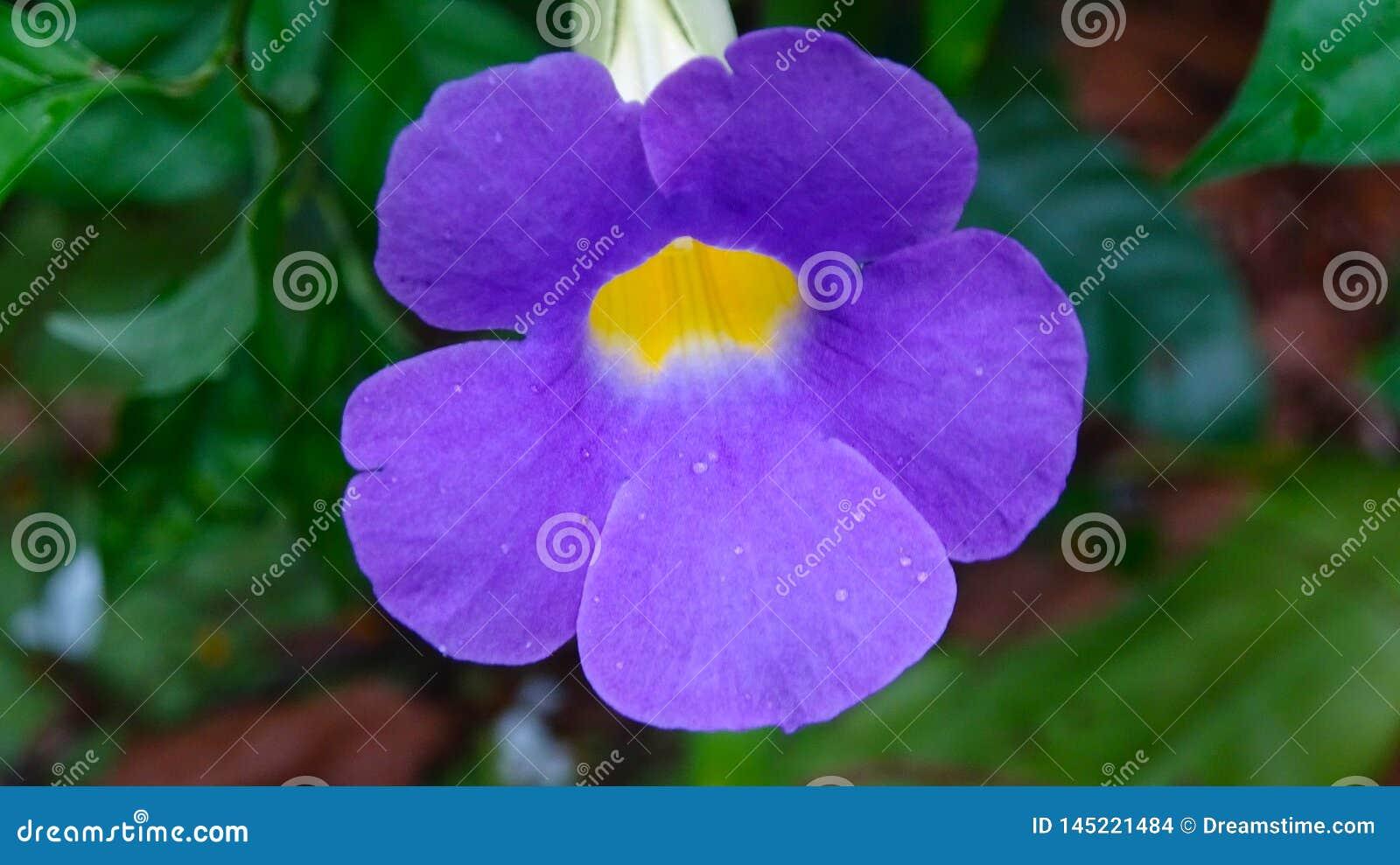 Romantische purpere bloemenillustratie als achtergrond