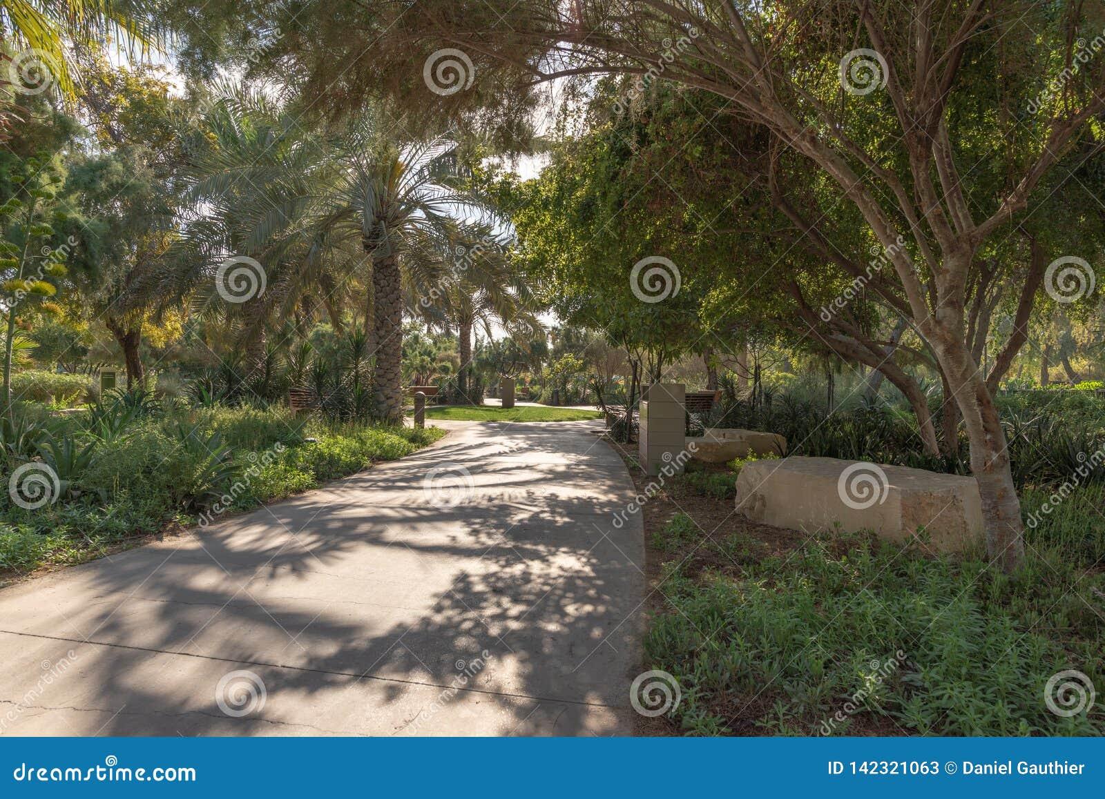 Romantyczny ranku przespacerowanie w miastowym pustynia parku, Abu Dhabi