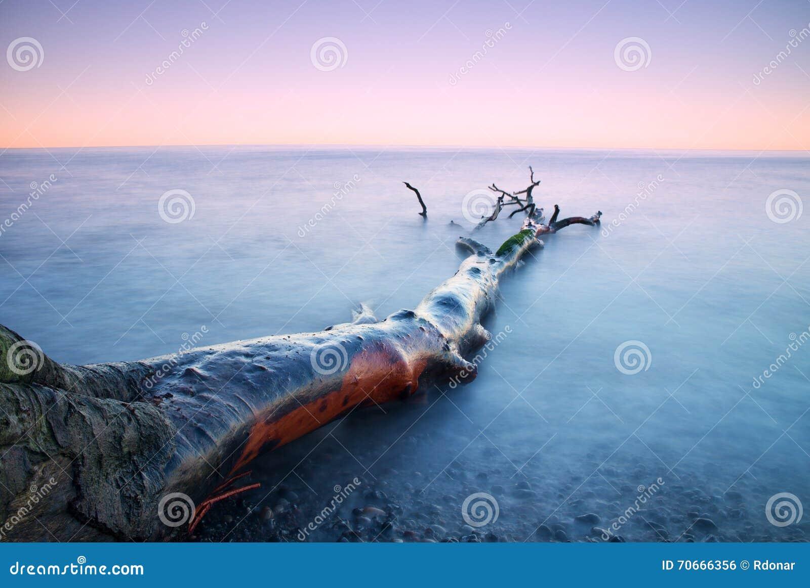 Romantyczny zmierzchu czas Osamotniony spadać drzewo na pustej kamienistej linii brzegowej Śmiertelny drzewo z gałąź w wodzie, na