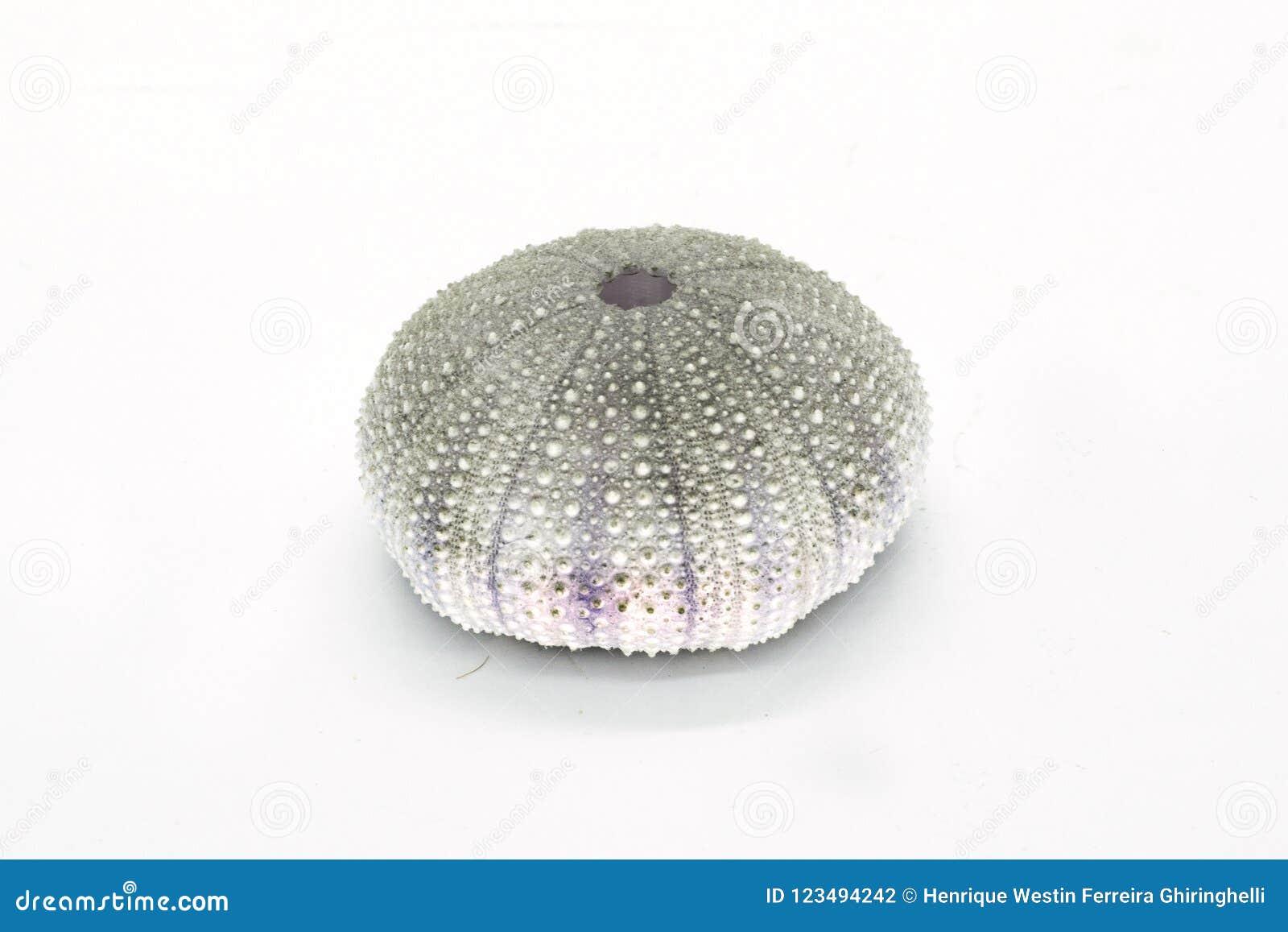 Rond gemaakte geïsoleerd shell