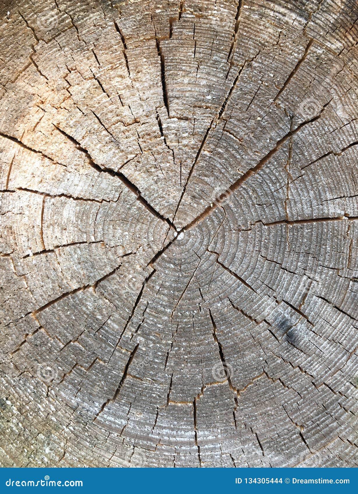 Rond verminderde boom met jaarringen