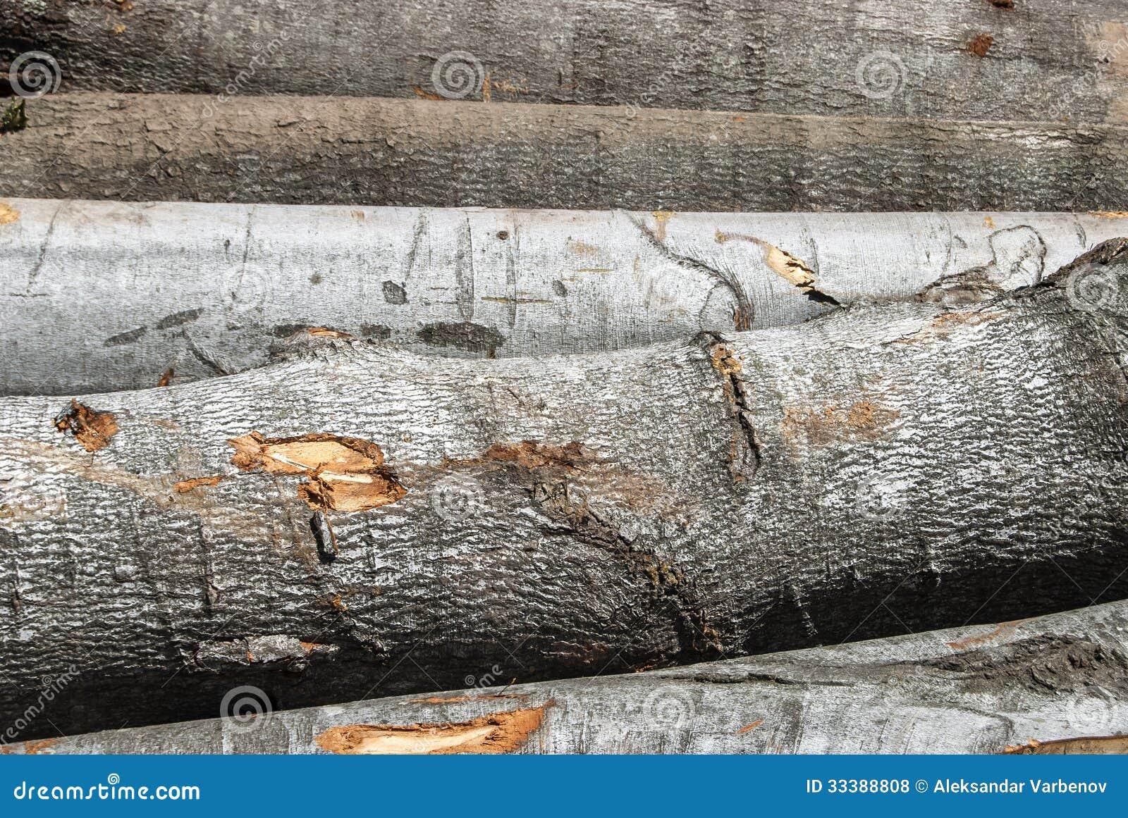 rondins de coupe en bois de h tre photos libres de droits image 33388808. Black Bedroom Furniture Sets. Home Design Ideas