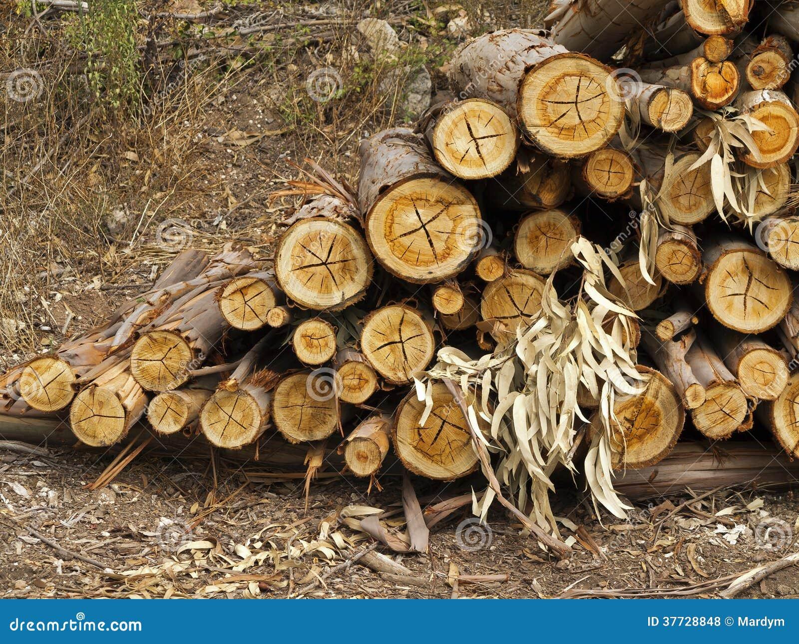 Comment traiter du bois deucalyptus ? La réponse est sur