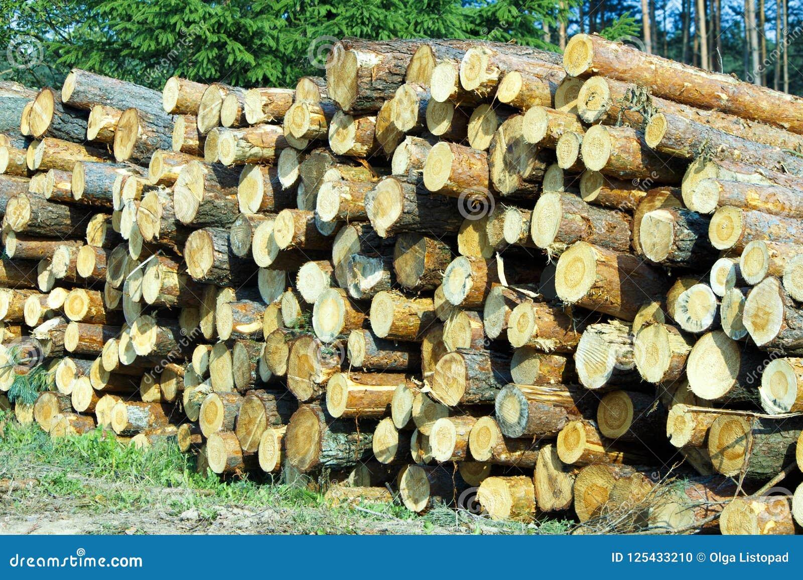 Rondins en bois des bois de pin dans les rondins fraîchement coupés d arbre de forêt empilés sur l un l autre dans une pile
