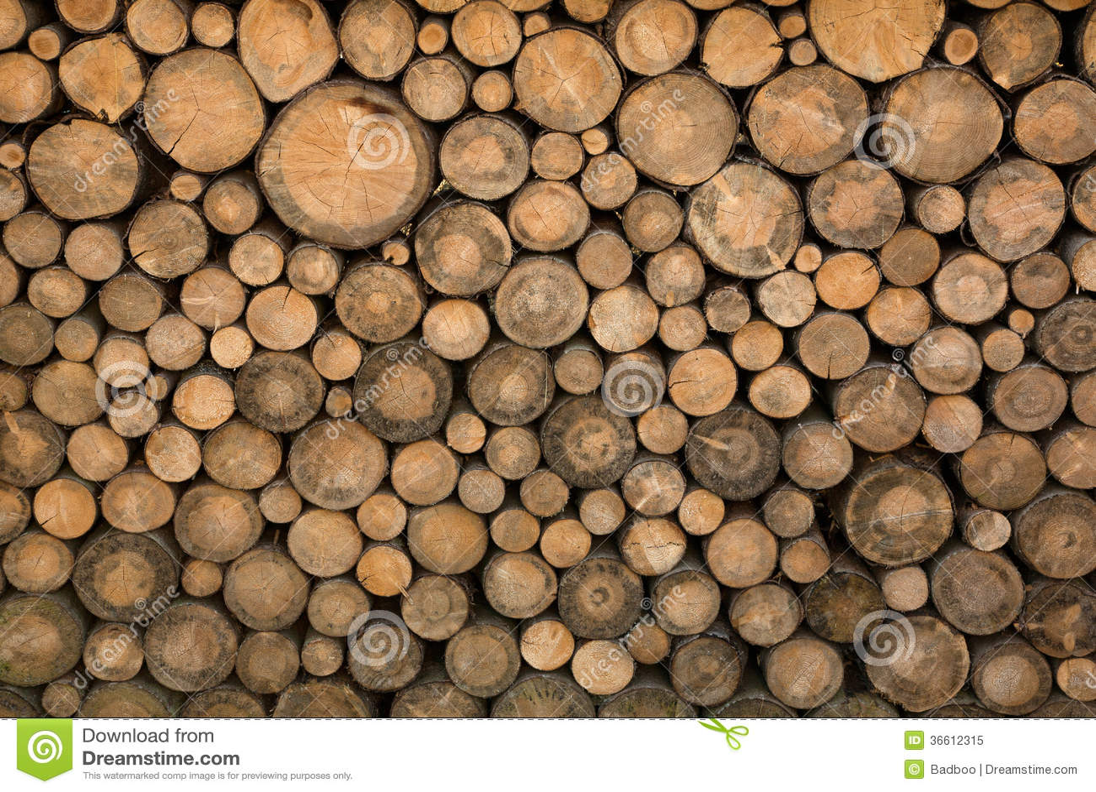 tree branch wallpaper