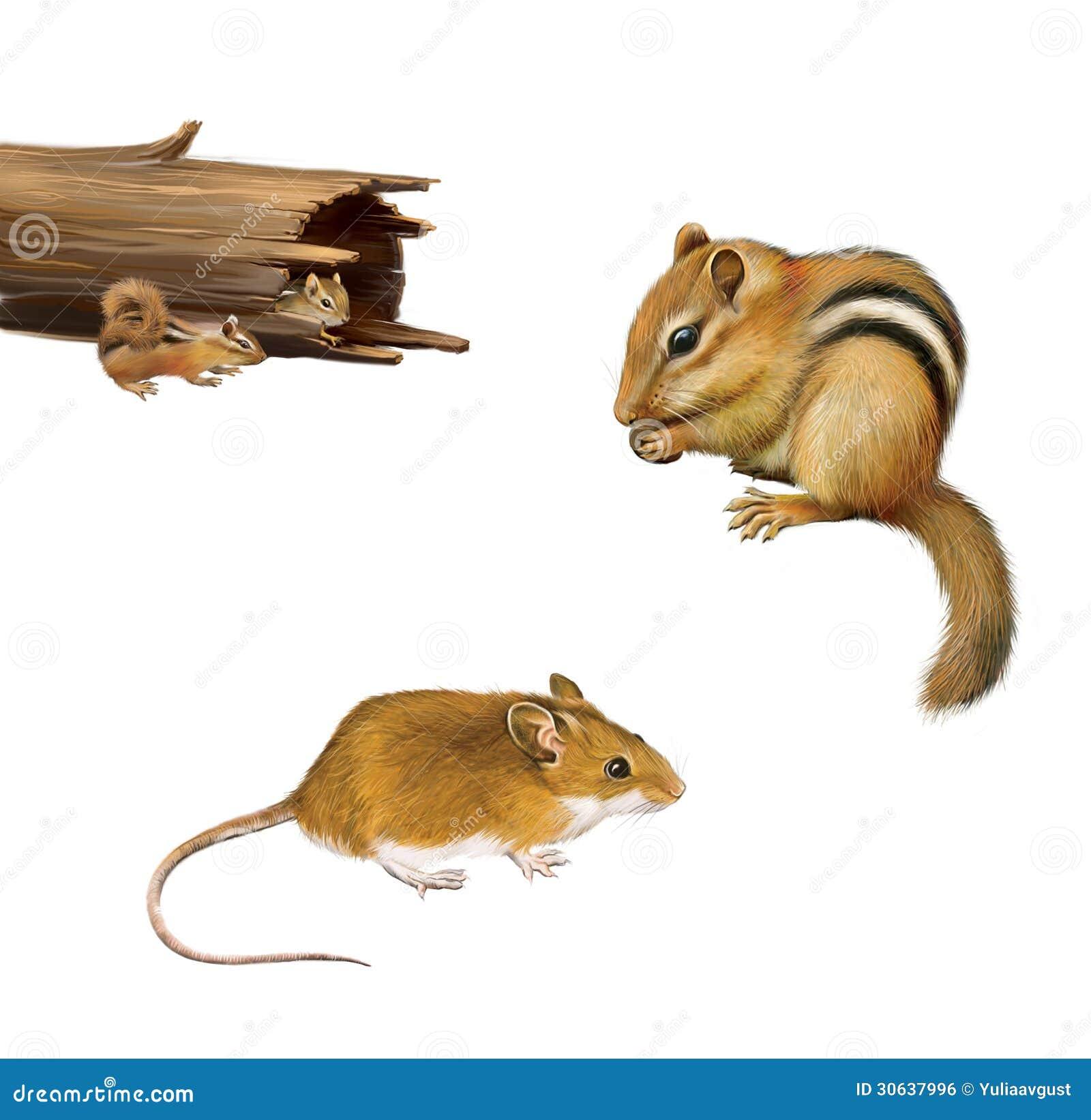 rongeurs tamia mangeant un crou souris de brun jaune deux tamia dans un rondin tomb d. Black Bedroom Furniture Sets. Home Design Ideas