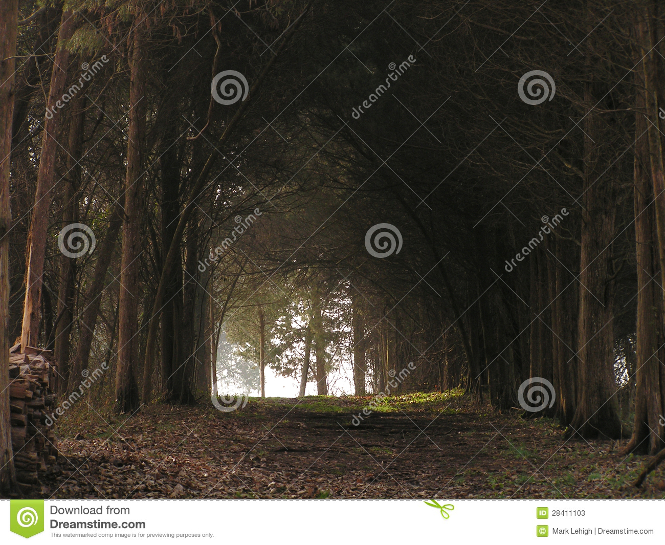 Download Ronnie's woods stock image. Image of peaceful, natural - 28411103