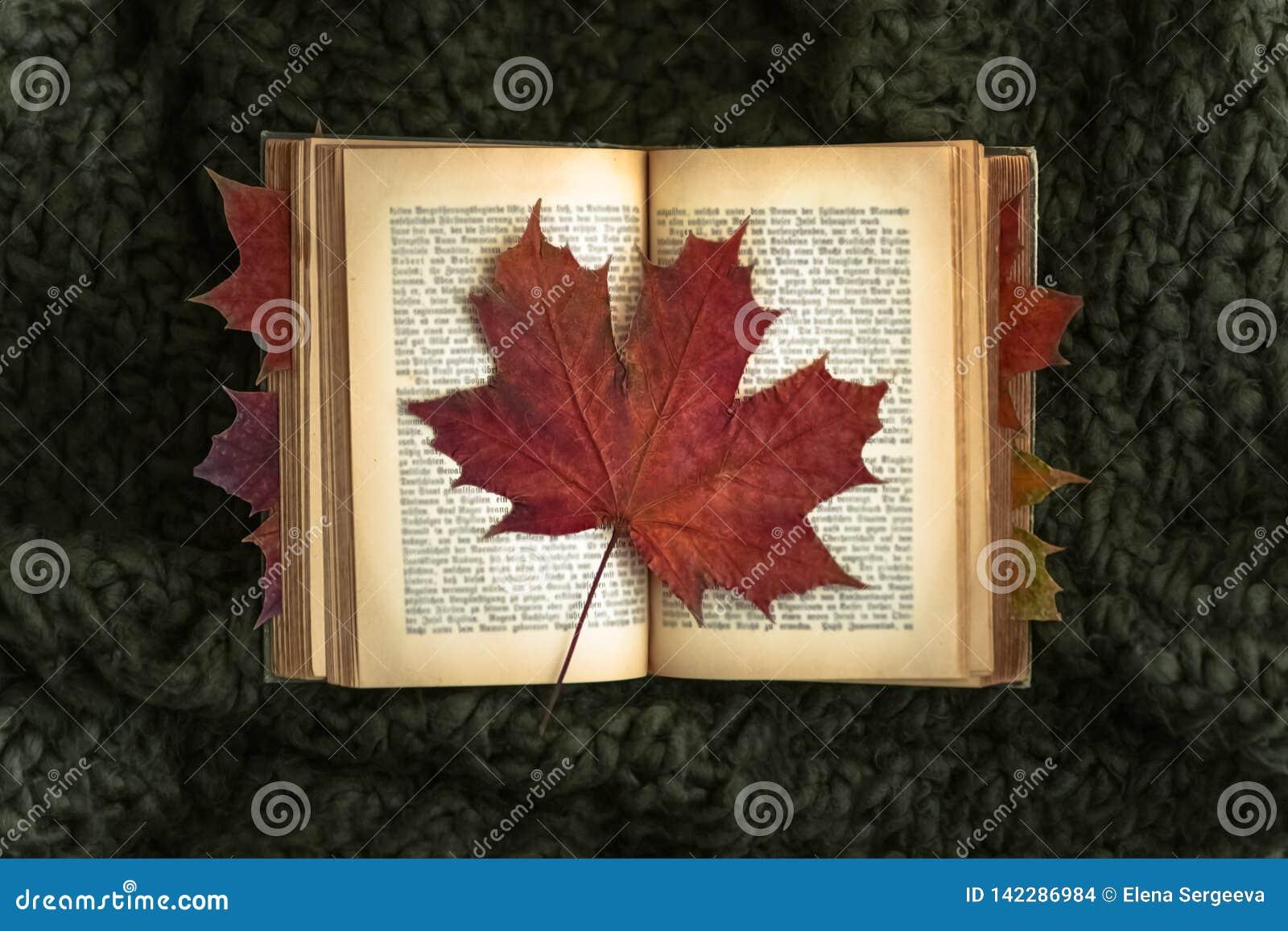 Rood blad op oud boek