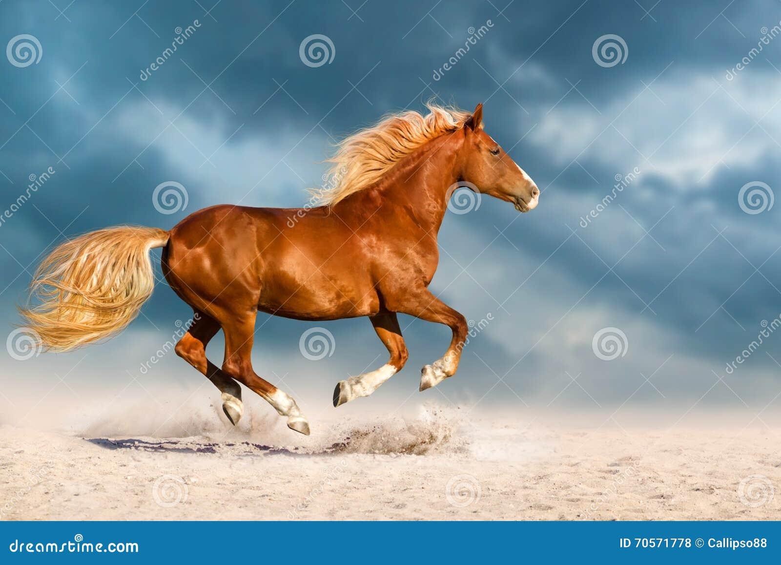 Rood die paard in woestijn in werking wordt gesteld