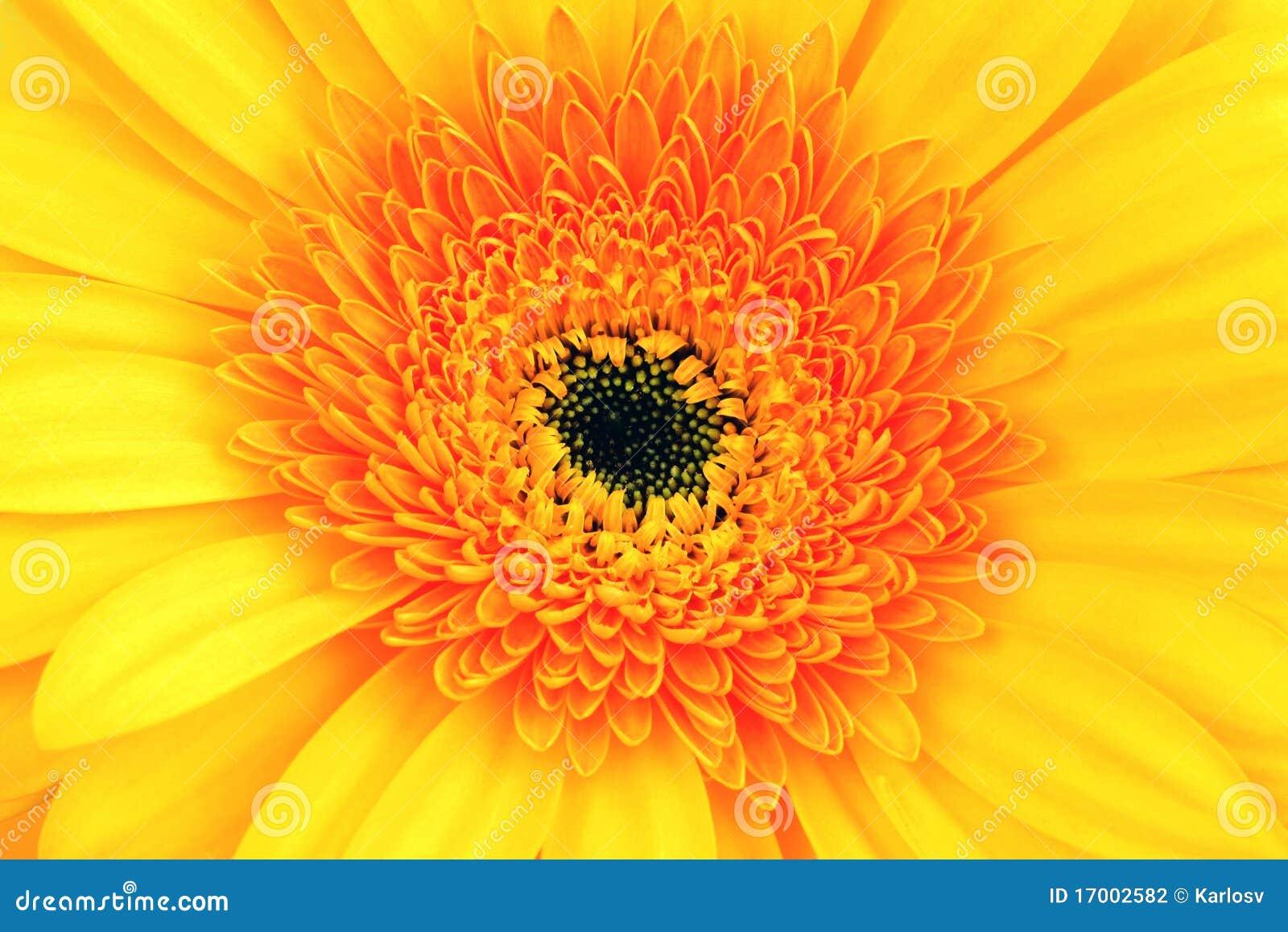Rood-gele bloem dichte omhooggaand