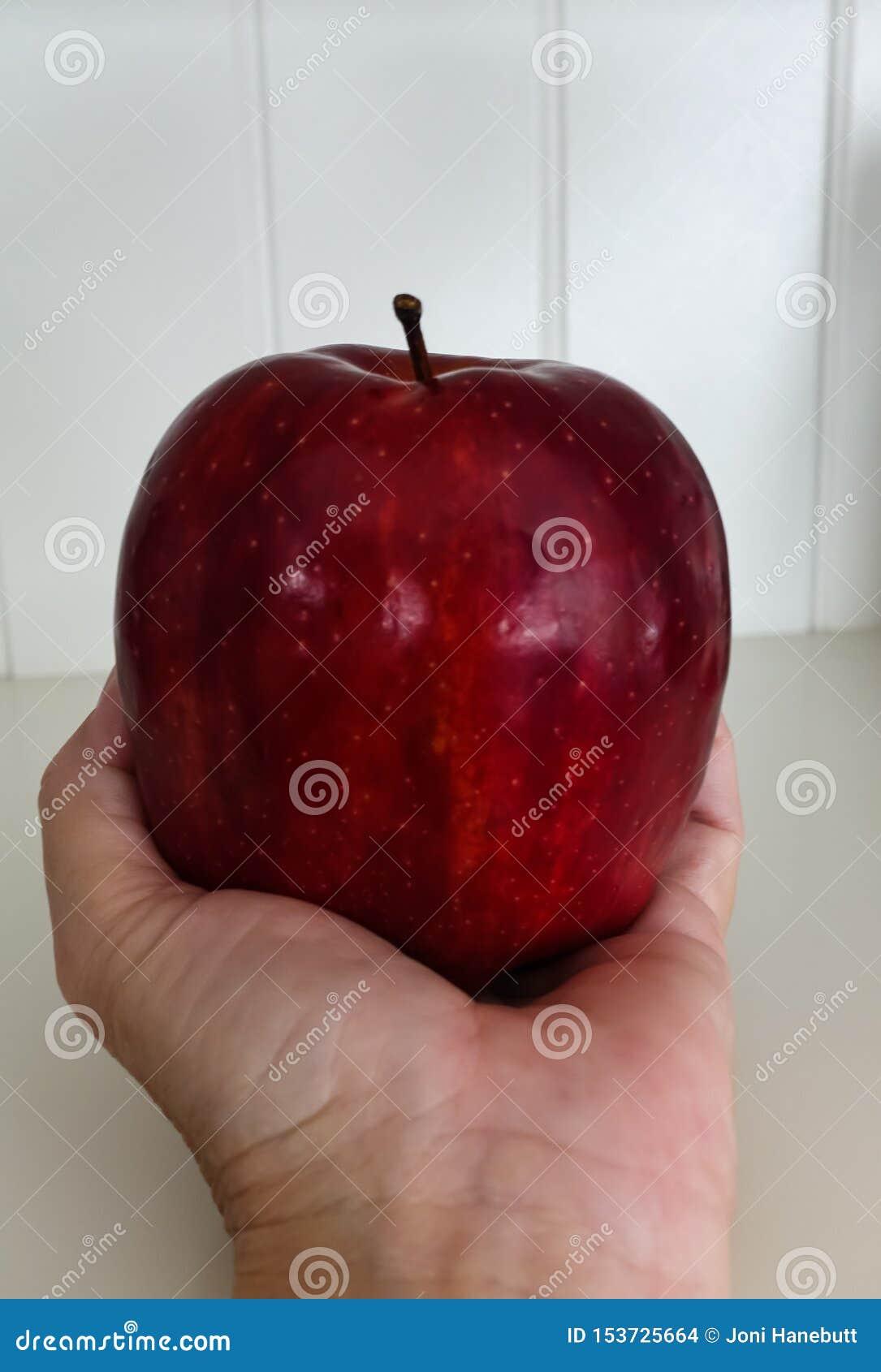 Rood - heerlijke die appel in een hand wordt gehouden
