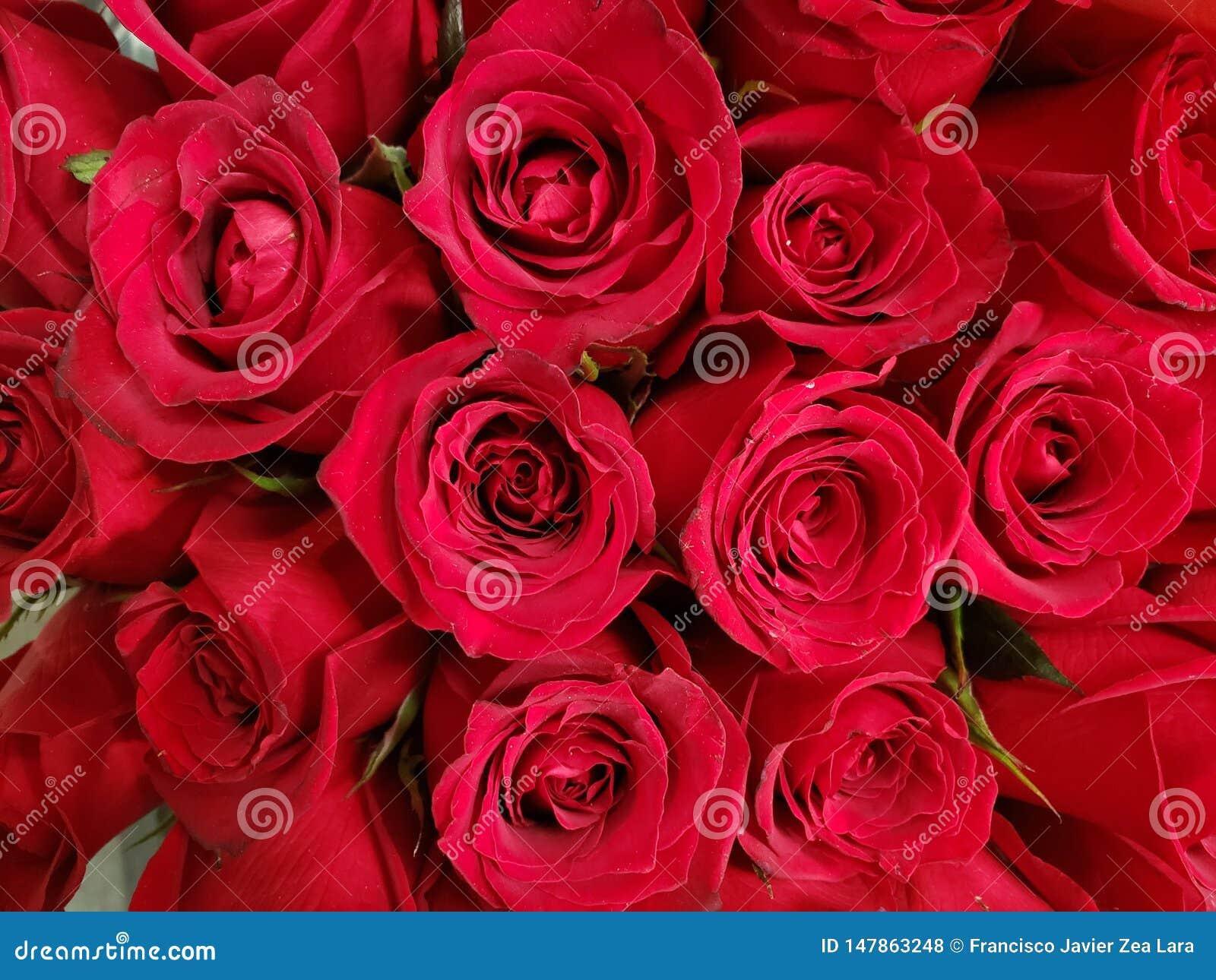 Rood nam bloem in een bloemenboeket voor gift van liefde, achtergrond en textuur toe
