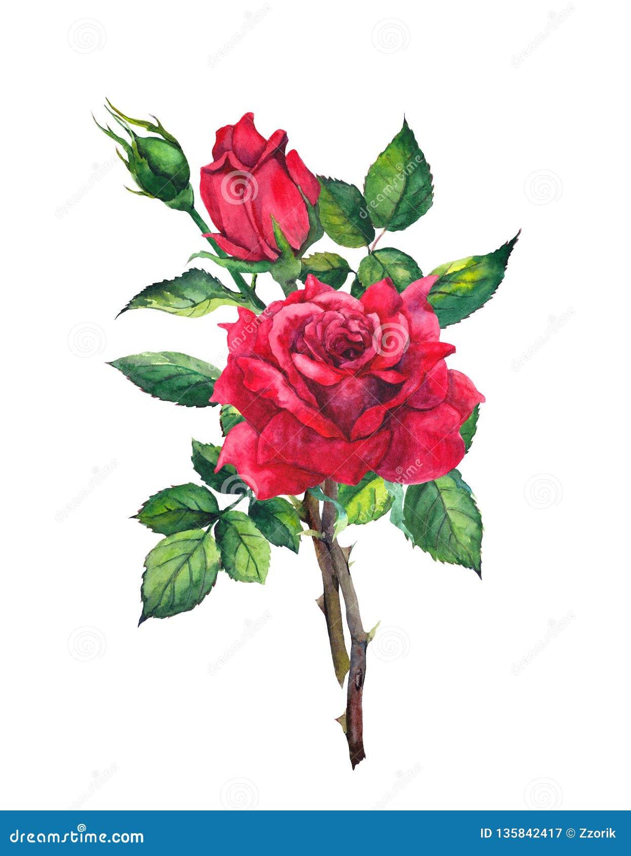Rood nam bloem toe - stam met bladeren watercolor