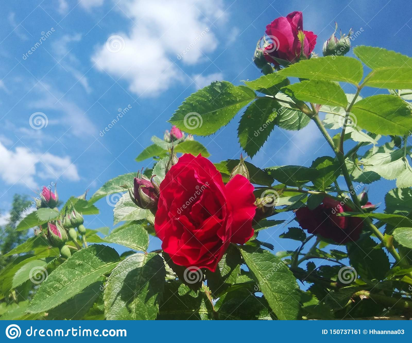 Rood nam in de hemel toe