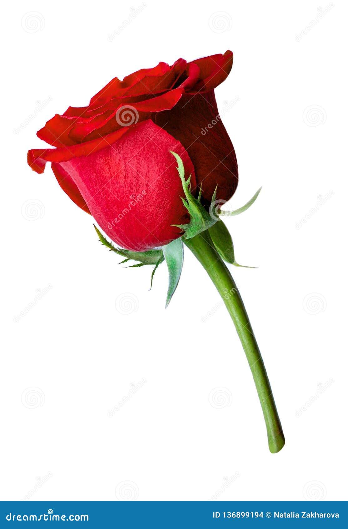 Rood nam en roze die harten op witte achtergrond worden geïsoleerd toe Valentine Day, Huwelijkskaart Het concept van de liefde Vl