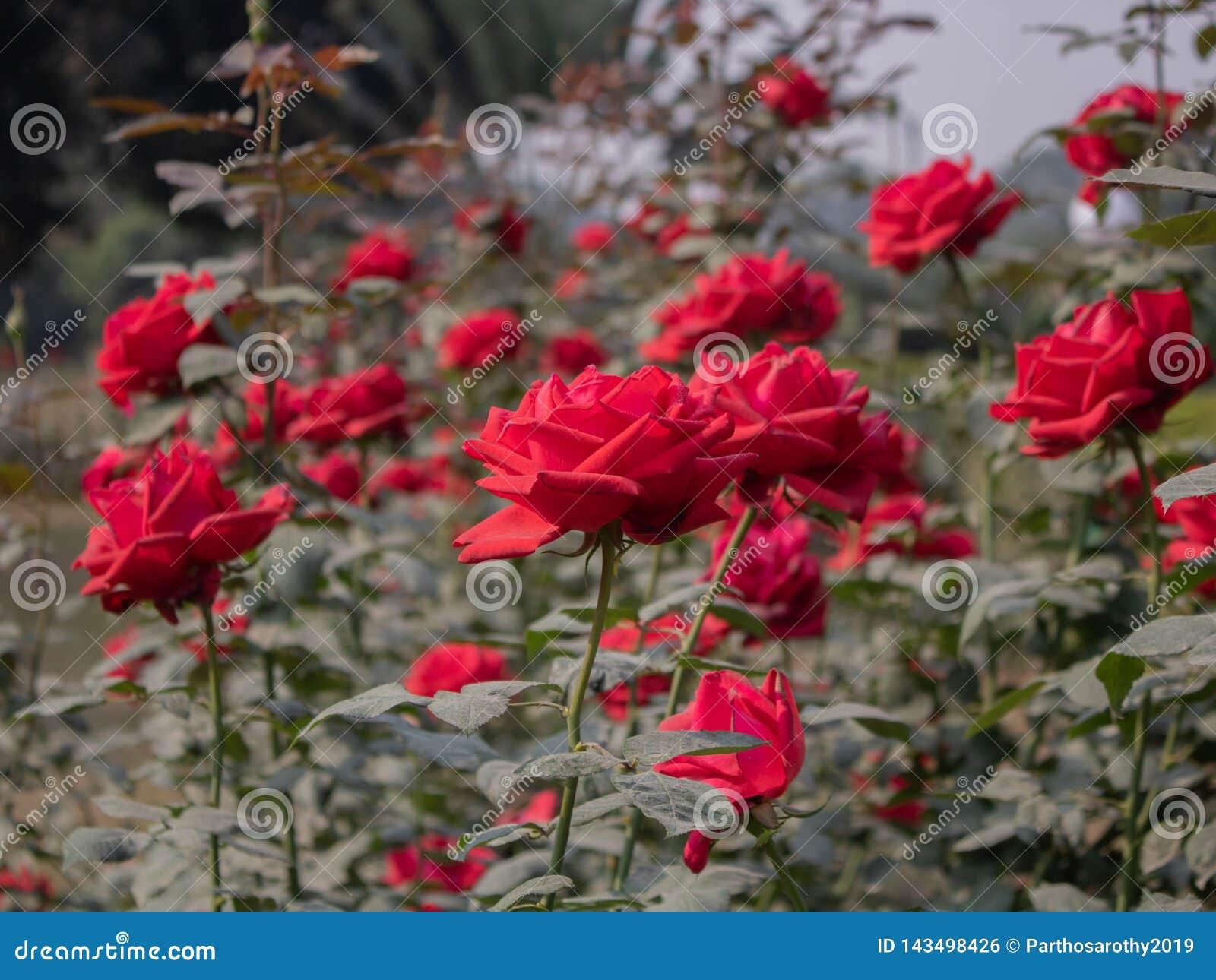 Rood nam installaties met bloemen toe