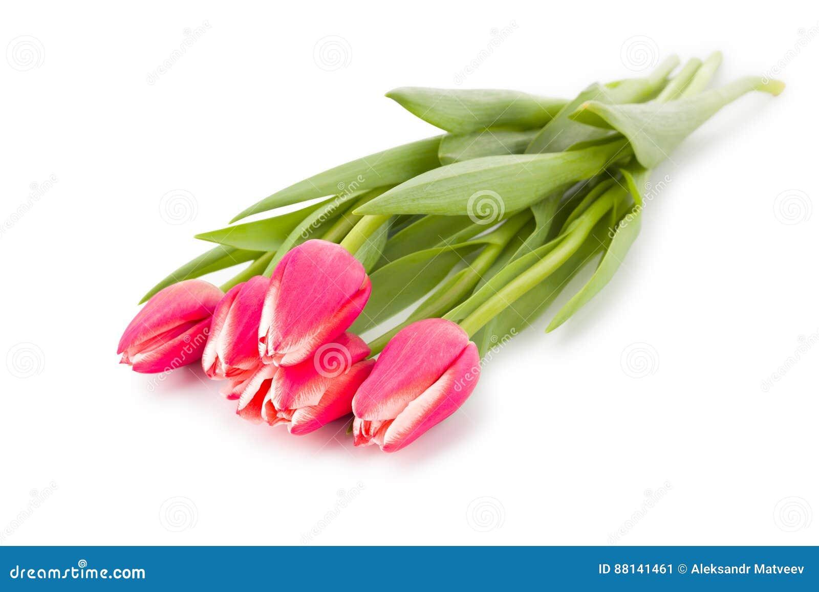 Rood roze die de tulpenboeket van de de lentebloem op witte achtergrond wordt geïsoleerd Met het knippen van weg Hoogste mening