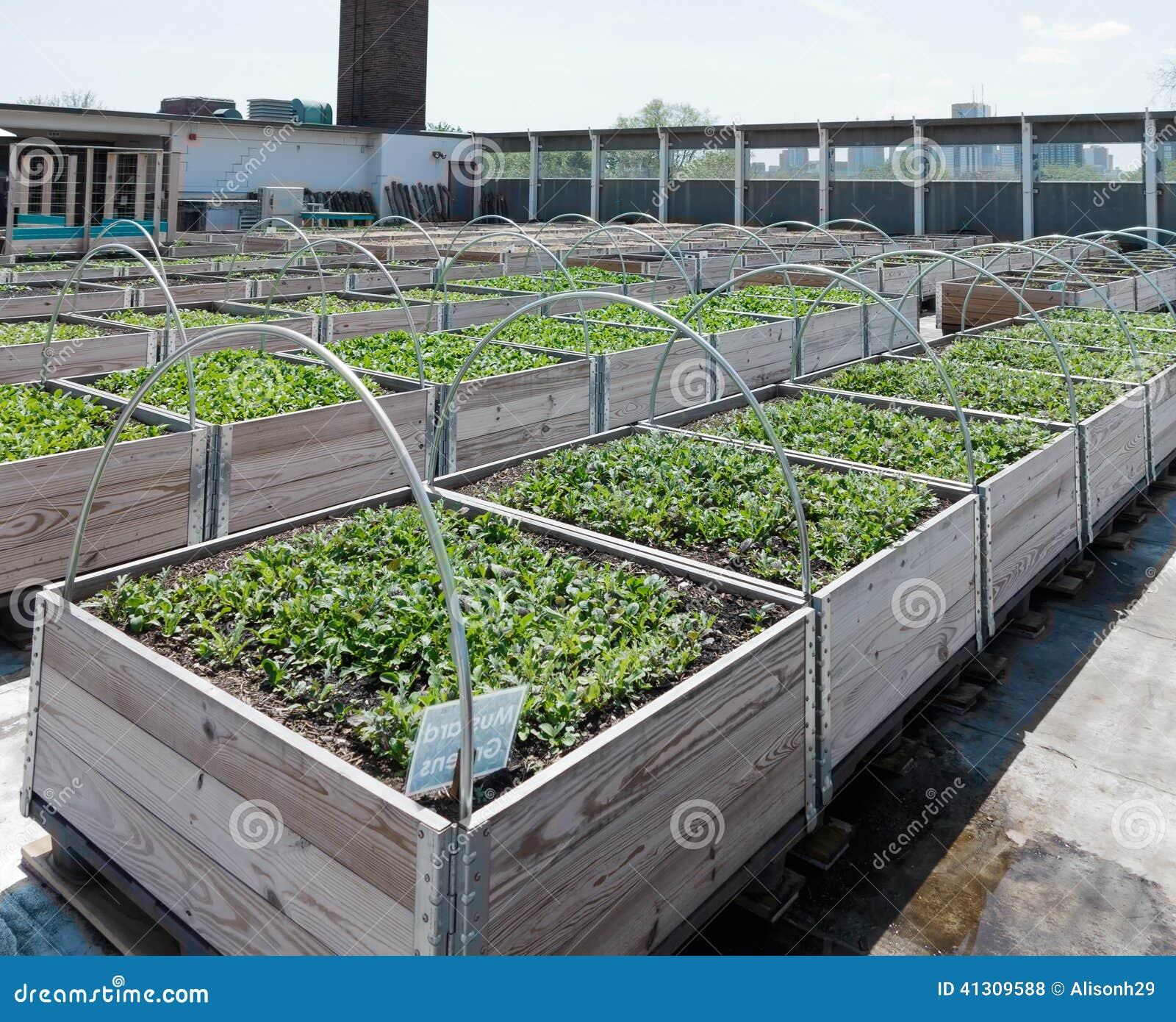 Roof Top Garden Terrace Garden Kitchen Garden Vegetable: Rooftop Garden Stock Photo