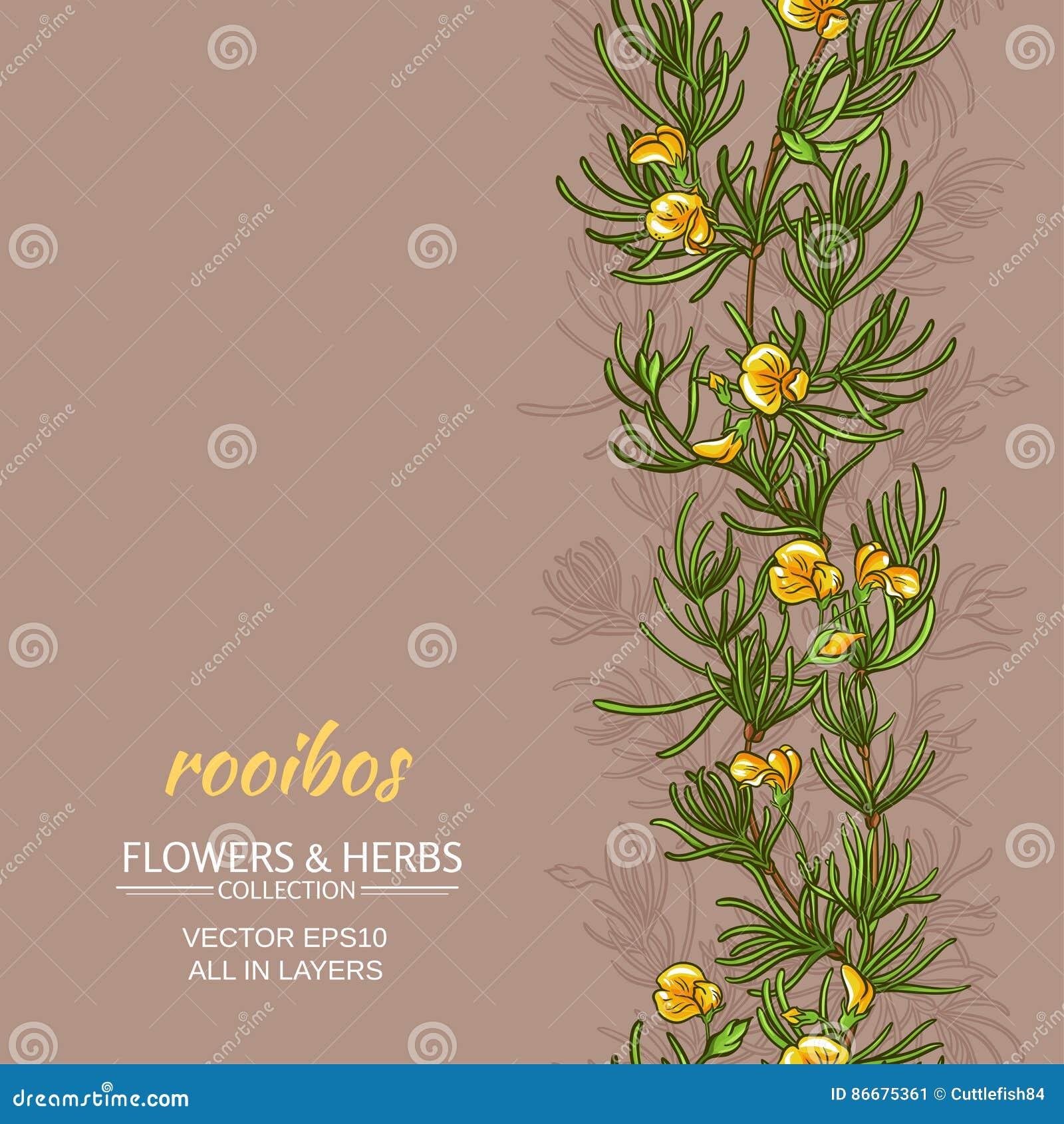 Rooibos vektorbakgrund