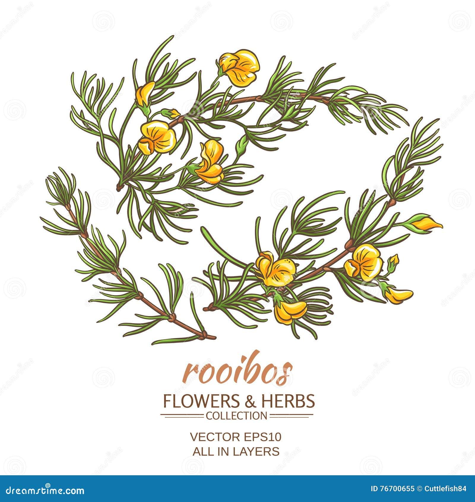 Rooibos-Vektorsatz
