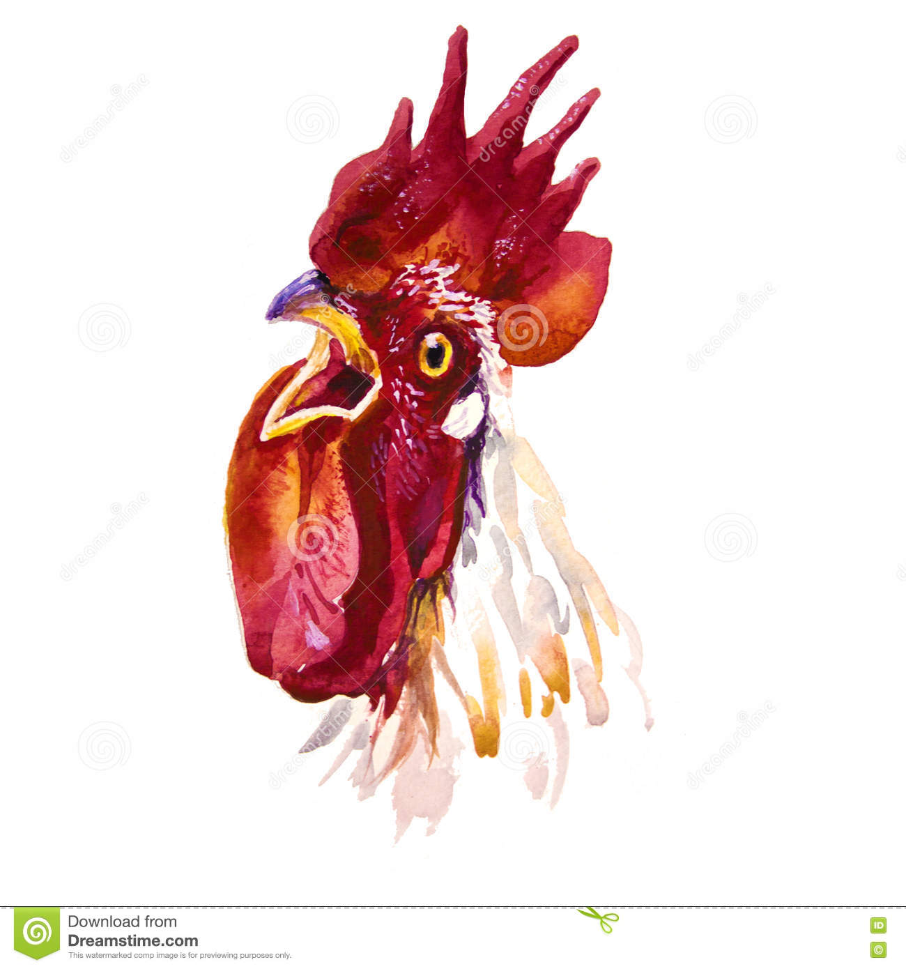Rooster Watercolor Illustration For Chinese New Year Greeting Card ...