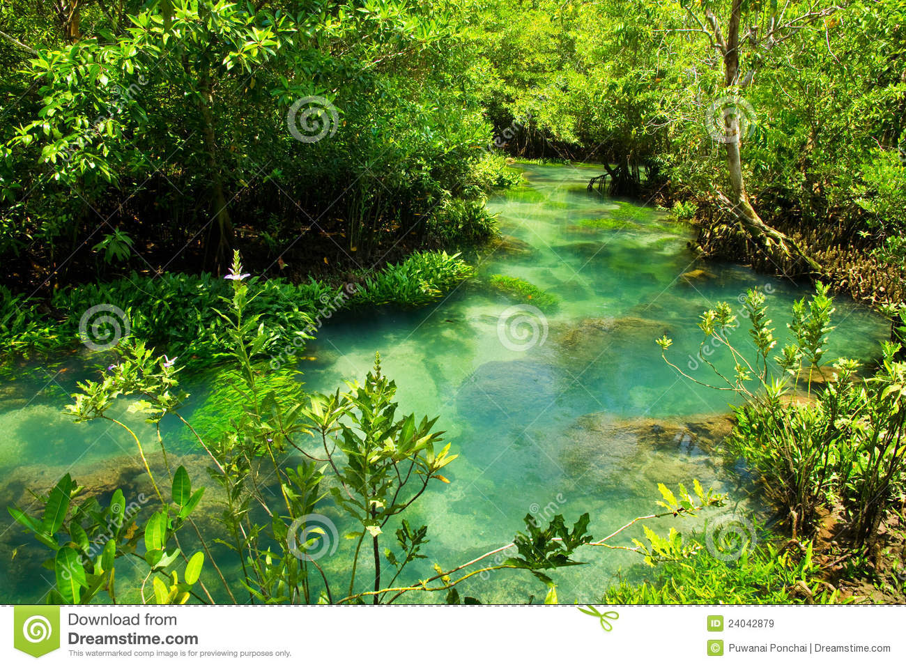 The root and crystal stream